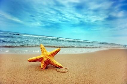 starfish_on_the_beach_stock_photo_165955